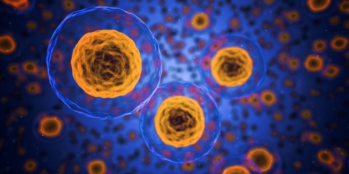 immune system, système immunitaire, coronavirus, Covid-19, osteopathy, Ostéopathie, Santé, Health