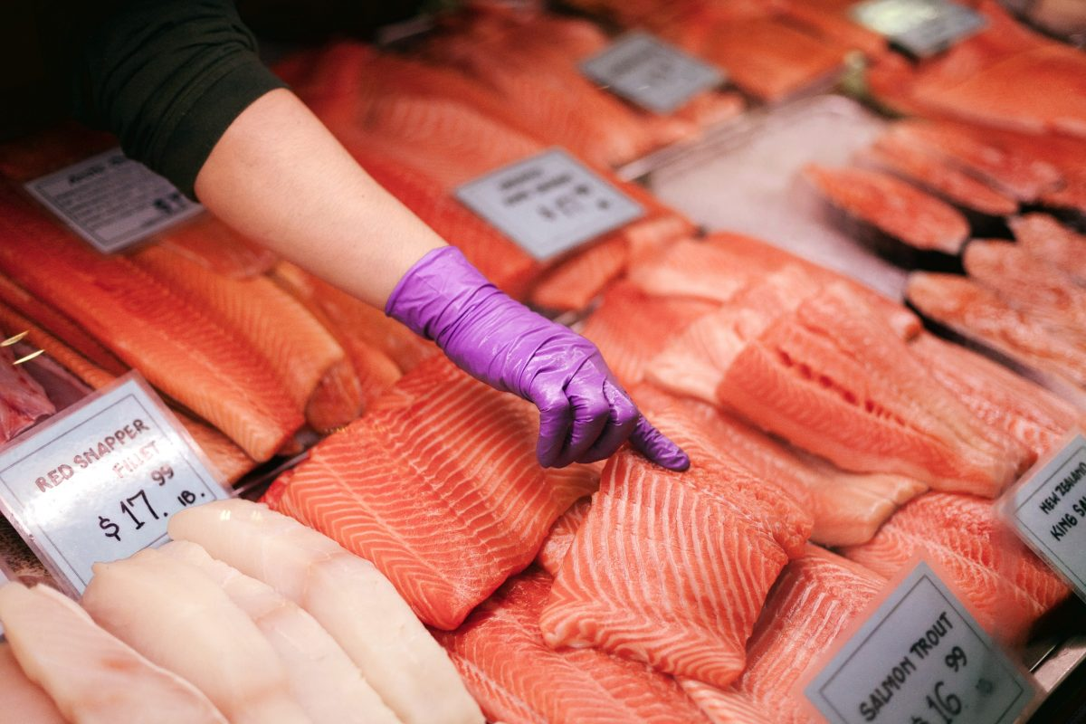 farmed salmon, toxic food, toxicity, saumon, élevage, toxique, toxicité